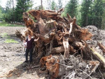 stump pile 2