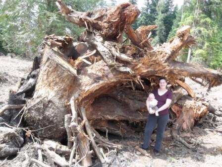 stump pile