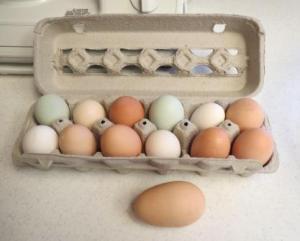 eggz1